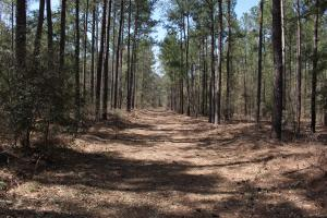 Brier Creek Hunting Tract in Jefferson, GA (38 of 82)