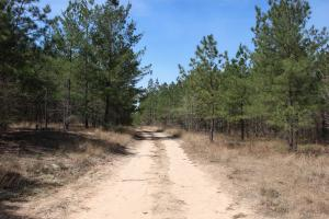 Brier Creek Hunting Tract in Jefferson, GA (49 of 82)