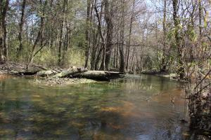 Brier Creek Hunting Tract in Jefferson, GA (23 of 82)