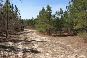 Brier Creek Hunting Tract in Jefferson, GA (10 of 82)