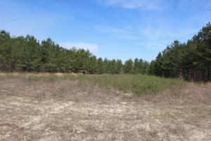 Brier Creek Hunting Tract in Jefferson, GA (65 of 82)