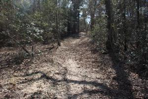 Brier Creek Hunting Tract in Jefferson, GA (5 of 82)