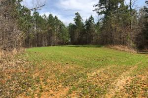 Ag Fields and Timber in Calhoun, MS (3 of 14)