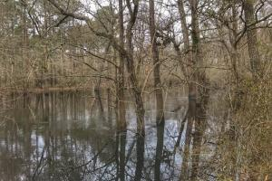 South River Hunting Retreat & Duck Impoundment in Sampson, NC (28 of 48)