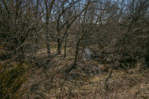 Yates Center Income Producing & Hunting Land in Woodson, KS (37 of 65)