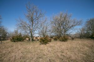 Yates Center Income Producing & Hunting Land in Woodson, KS (46 of 65)