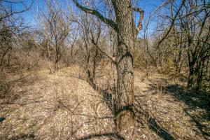 Yates Center Income Producing & Hunting Land in Woodson, KS (23 of 65)