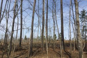 Wateree Inland Development Tract or Private Homesite in Kershaw, SC (6 of 15)