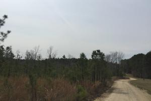 Wateree Inland Development Tract or Private Homesite in Kershaw, SC (10 of 15)