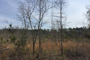 Wateree Inland Development Tract or Private Homesite in Kershaw, SC (11 of 15)