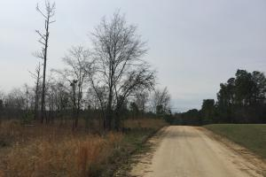 Wateree Inland Development Tract or Private Homesite in Kershaw, SC (13 of 15)