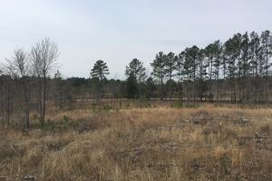 Wateree Inland Development Tract or Private Homesite in Kershaw, SC (14 of 15)