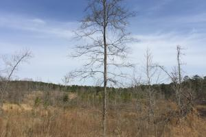 Wateree Inland Development Tract or Private Homesite in Kershaw, SC (15 of 15)