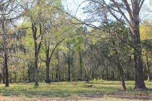 Black Lake , Belle Oak Subdivision Lots for Sale - Natchitoches Parish LA