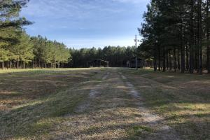 Enfield Hunting / Homesite / Timber Investment Tract - Halifax County, NC