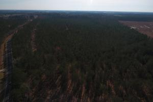 Dawson's Station Timber Tract in Lenoir, NC (2 of 4)