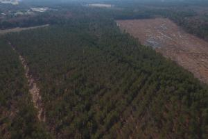 Dawson's Station Timber Tract in Lenoir, NC (3 of 4)