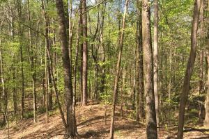 A True Timber Tract - Carroll County MS