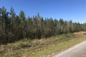 Future Income Producing Pine Timber - Scott County MS