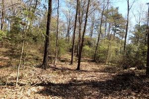 Private 30-Acre Waterfront – Over 2,200 Foot Water Frontage in Nacogdoches, TX (30 of 37)