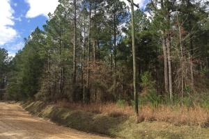 McCarley Investment Property  in Carroll, MS (3 of 10)