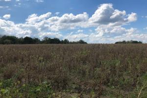 Arkadelphia Road Farm and Hunting Property - Blount County AL