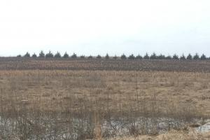 Burr NE Blast & Cast tree grove and milo plot (25 of 37)