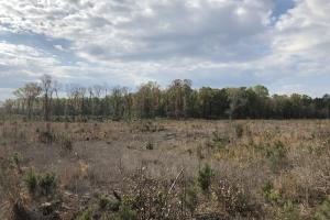Pineland Woodsville Rd 33 ac Hunting / Rec. Land in Jasper, SC (32 of 36)