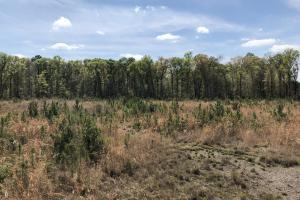 Pineland Woodsville Rd 33 ac Hunting / Rec. Land in Jasper, SC (22 of 36)