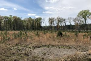 Pineland Woodsville Rd 33 ac Hunting / Rec. Land in Jasper, SC (23 of 36)