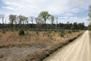 Pineland Woodsville Rd 33 ac Hunting / Rec. Land in Jasper, SC (21 of 36)