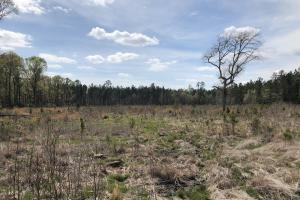 Pineland Woodsville Rd 33 ac Hunting / Rec. Land in Jasper, SC (15 of 36)