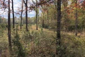 Pineland Woodsville Rd 33 ac Hunting / Rec. Land in Jasper, SC (10 of 36)