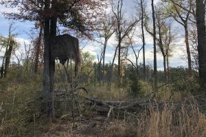 Pineland Woodsville Rd 33 ac Hunting / Rec. Land in Jasper, SC (8 of 36)