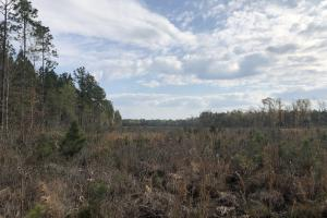 Pineland Woodsville Rd 33 ac Hunting / Rec. Land in Jasper, SC (34 of 36)