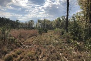 Pineland Woodsville Rd 33 ac Hunting / Rec. Land in Jasper, SC (13 of 36)