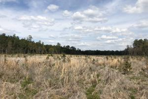 Pineland Woodsville Rd 33 ac Hunting / Rec. Land in Jasper, SC (18 of 36)