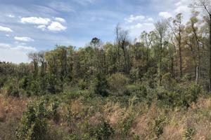 Pineland Woodsville Rd 33 ac Hunting / Rec. Land in Jasper, SC (29 of 36)