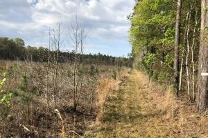 Pineland Woodsville Rd 33 ac Hunting / Rec. Land in Jasper, SC (7 of 36)