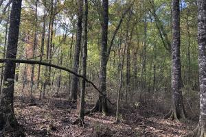 Pineland Woodsville Rd 33 ac Hunting / Rec. Land in Jasper, SC (14 of 36)