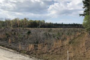 Pineland Woodsville Rd 33 ac Hunting / Rec. Land in Jasper, SC (30 of 36)