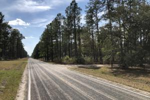 Pineland Woodsville Rd 33 ac Hunting / Rec. Land in Jasper, SC (36 of 36)