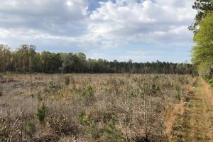 Pineland Woodsville Rd 33 ac Hunting / Rec. Land in Jasper, SC (31 of 36)