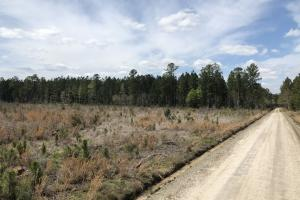 Pineland Woodsville Rd 33 ac Hunting / Rec. Land in Jasper, SC (19 of 36)