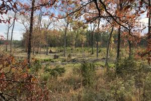 Pineland Woodsville Rd 33 ac Hunting / Rec. Land in Jasper, SC (11 of 36)