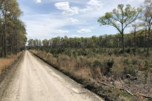 Pineland Woodsville Rd 33 ac Hunting / Rec. Land - Jasper County SC