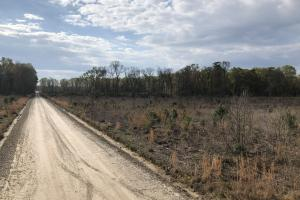 Pineland Woodsville Rd 33 ac Hunting / Rec. Land in Jasper, SC (6 of 36)