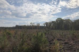 Pineland Woodsville Rd 33 ac Hunting / Rec. Land in Jasper, SC (33 of 36)