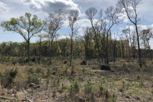 Pineland Woodsville Rd 33 ac Hunting / Rec. Land in Jasper, SC (16 of 36)
