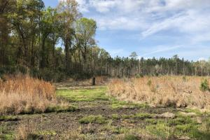 Pineland Woodsville Rd 33 ac Hunting / Rec. Land in Jasper, SC (9 of 36)